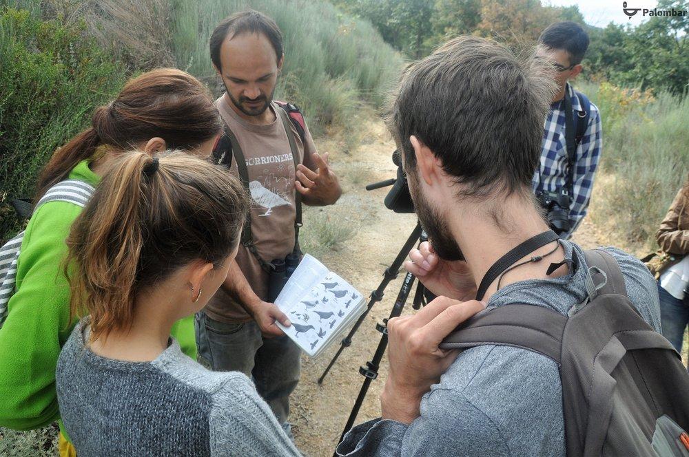 Identificação de aves observadas | 13 de outubro de 2018