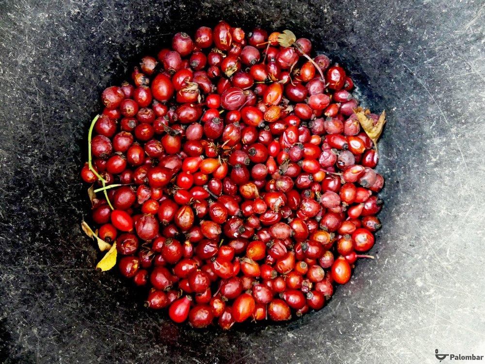 Fruto da roseira brava.