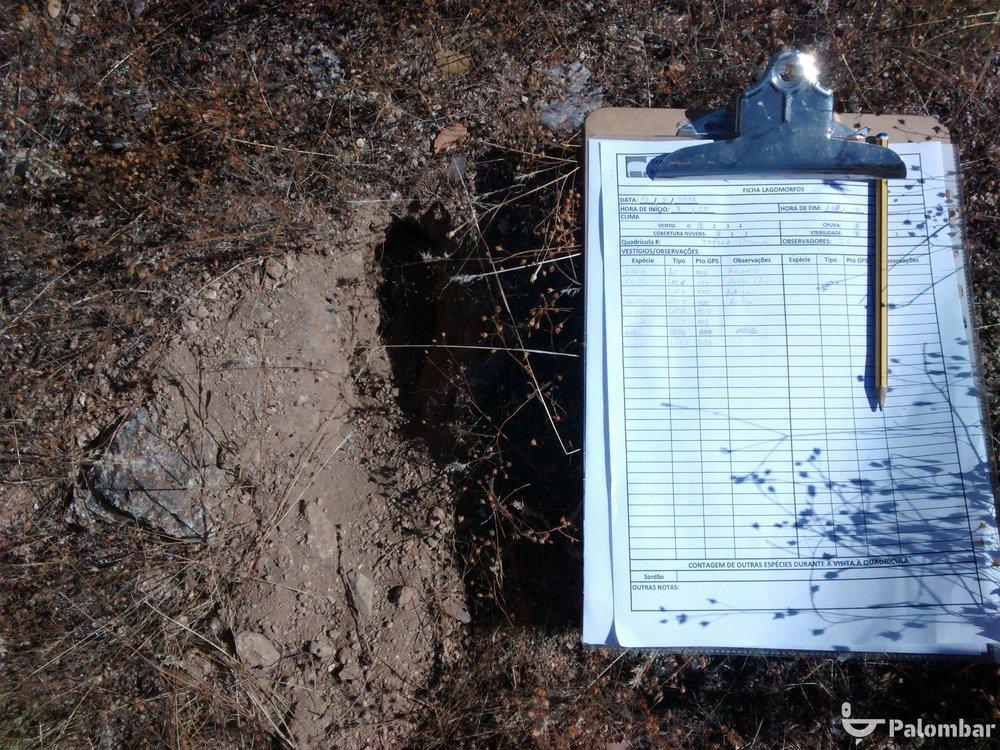 Ficha de campo utilizada na monitorização das populações de lagomorfos.