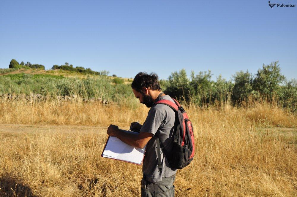Monitorização das populações de lagomorfos na área de implementação do LIFE Rupis.