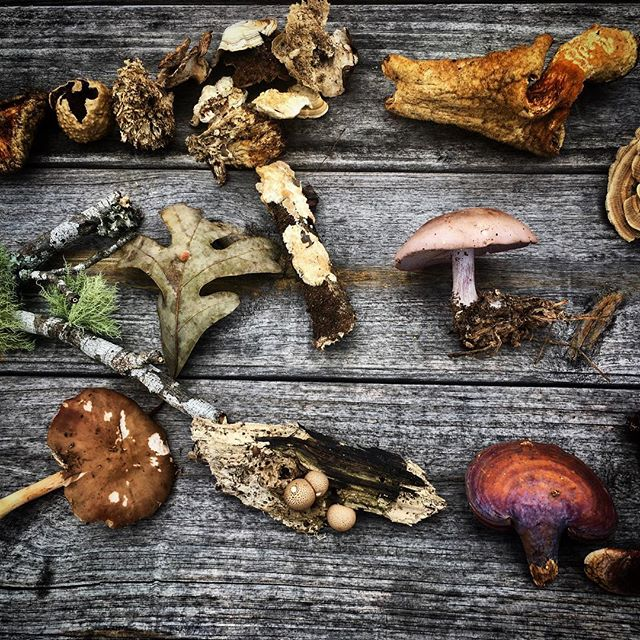 Nature is medicine. Learn more about edible and medicinal mushrooms this summer during the Odyssey Fellowship. Apply now, link in bio. @the.eco.institute #mushroomforaging #fungi #reishi #usnea #wildfood #natureismedicine #wonder #odysseyfellowship #ecoinstitute