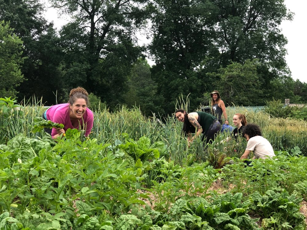 the-eco-institute-chapel-hill-nc-rising-earth-permaculture-environmental-education-gap-year.jpeg