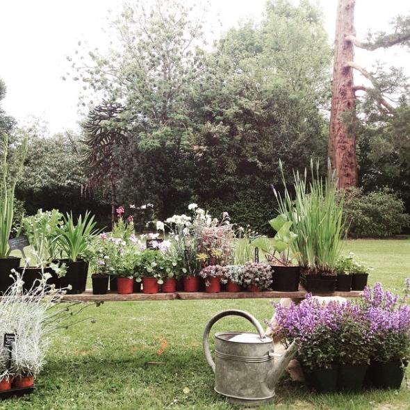 La Fête des Plantes 1.png