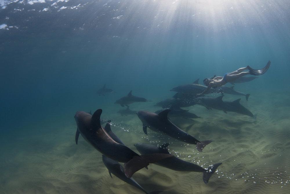 Hanli_Dolphins.jpg