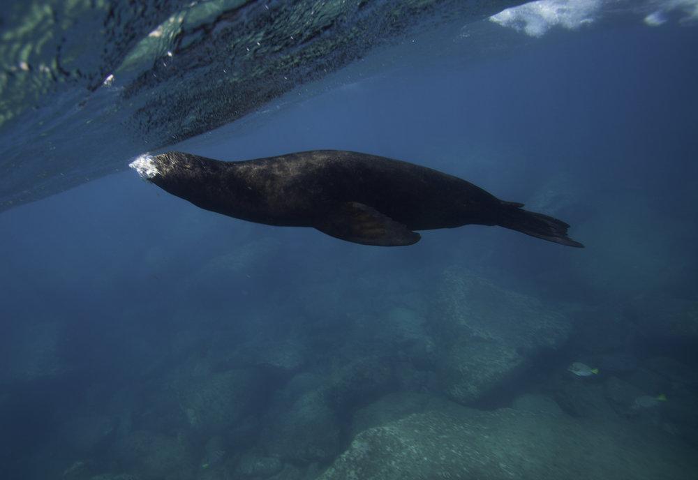 SeaLion Breath