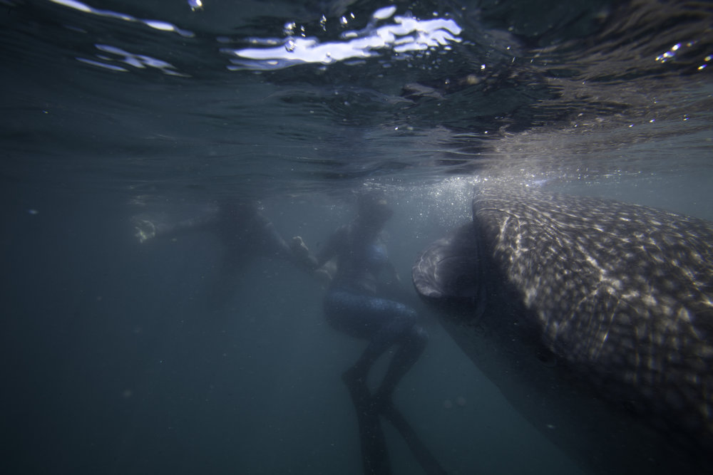 Jen & The Whale Shark