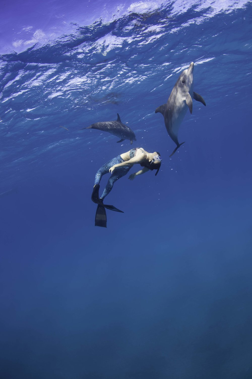 The Dolphin Dance  - Photographer: Peter Marshall // Freediver: Hanli Prinsloo