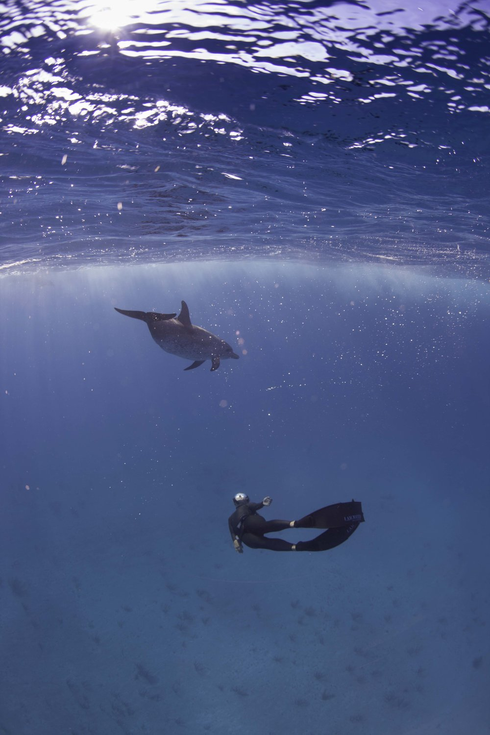 Dolphins and Sunrays - Photographer: Peter Marshall // Freediver: Hanli Prinsloo