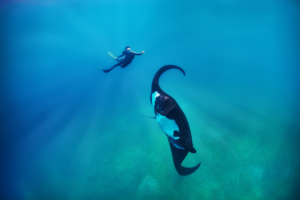 Manta Birostris - Photographer: Peter Marshall // Freediver: Hanli Prinsloo