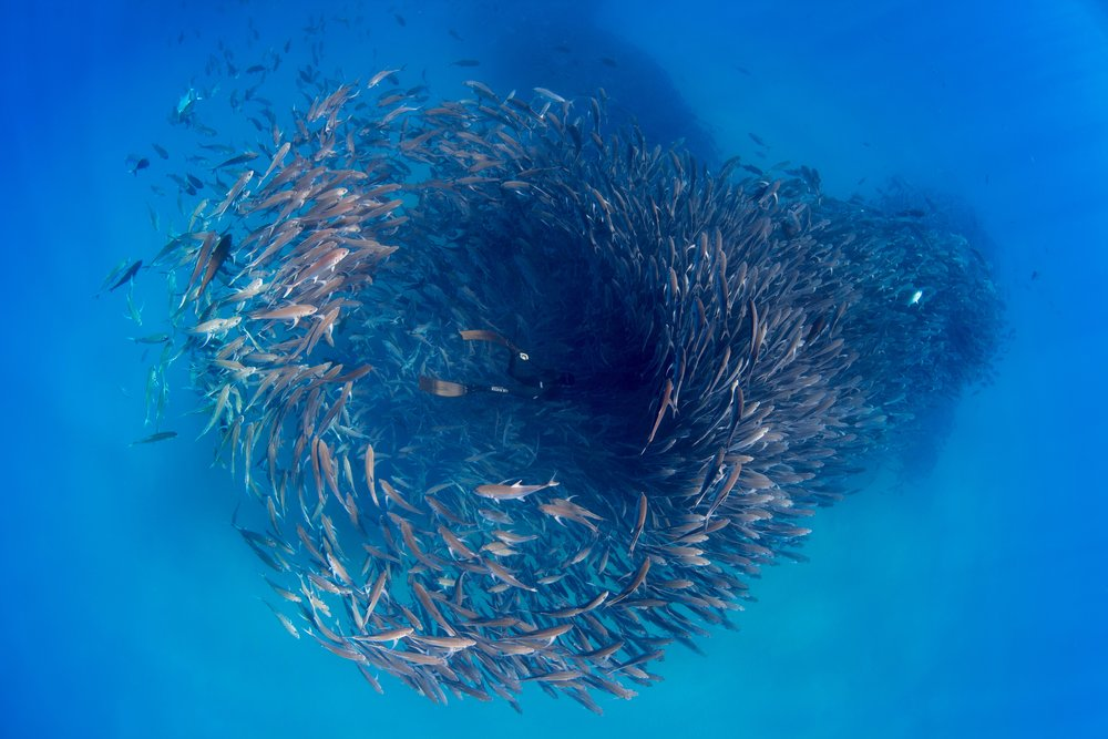 FISH TORNADO // Baja Mexico   Photographer: Peter Marshall / Freediver: Hanli