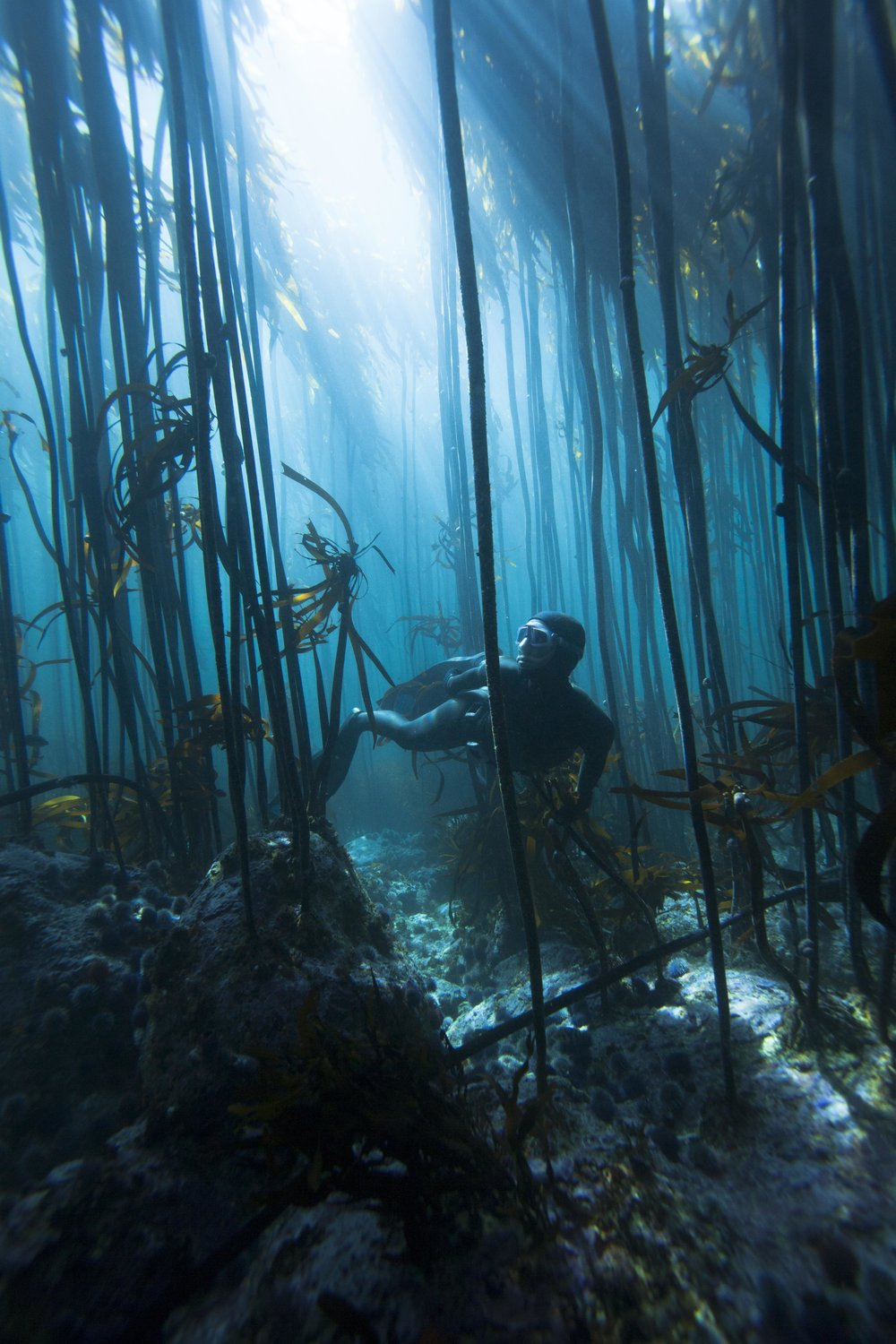 MAGICAL CAPE KELP FORESTS // South Africa   Photographer: Peter Marshall / Freediver Hanli