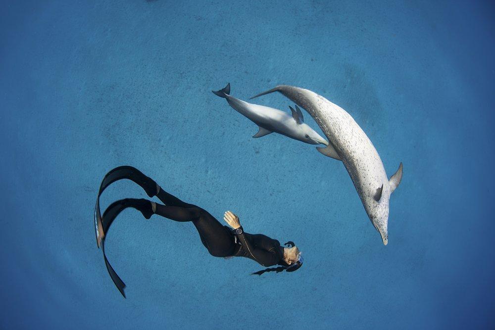 Hanli_DolphinBabyDance_Bahamas.jpg