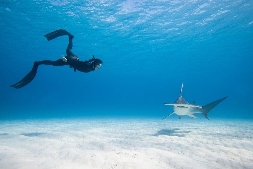 Hanli_HammerheadFacetoFace_Bahamas.jpg