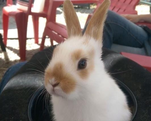 bunnyhat.jpg