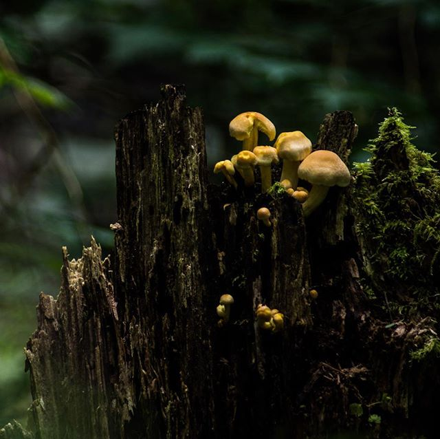 We don't encourage eating mysterious forest mushrooms... but what can you really do, they're right there! 🍄