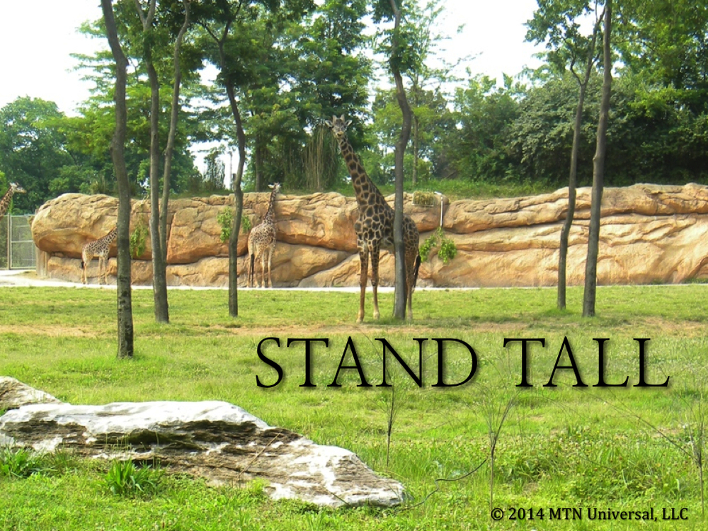 Stand-Tall.001.jpg