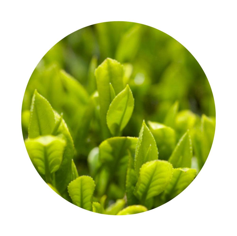 GlowButter-GreenTea.jpg