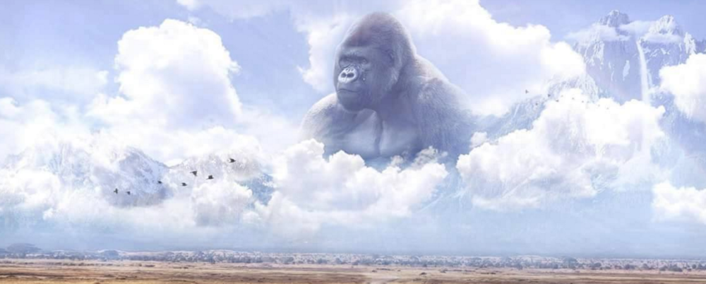 -Harambe ( We Miss You )