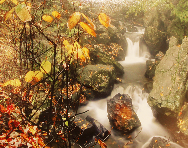 Autumn At Ricketts Glen By: Bob Patterson