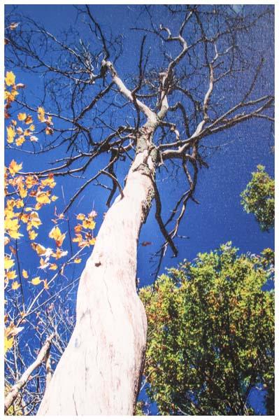 Gordon Sarti, Leaves and Limbs