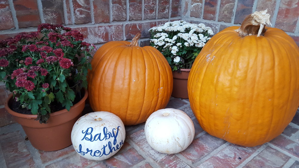 Baby Reveal with Pumpkins and Mums