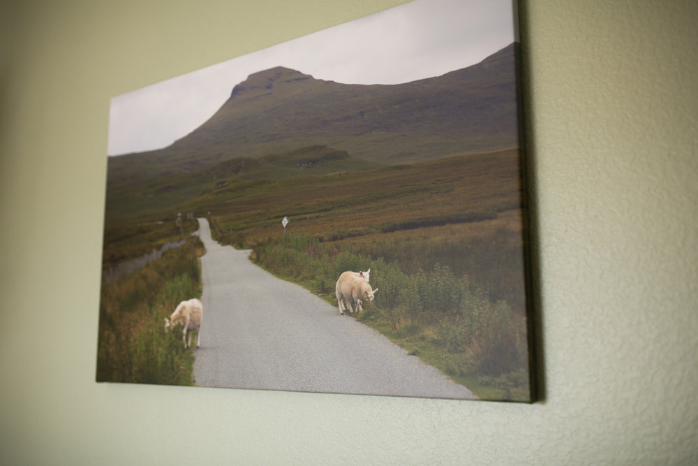 Wrapped Canvas Photo of Sheep in Scottish Countryside in Outdoor Green Theme Baby Boy Nursery