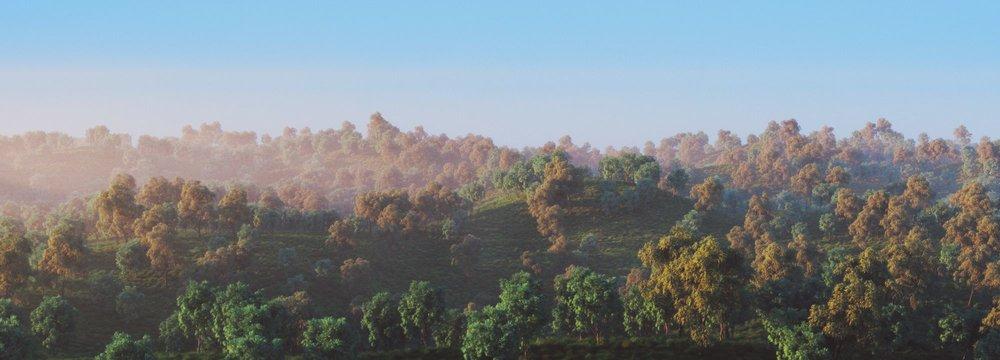 Forest-Landscape_001-Exposure.jpeg