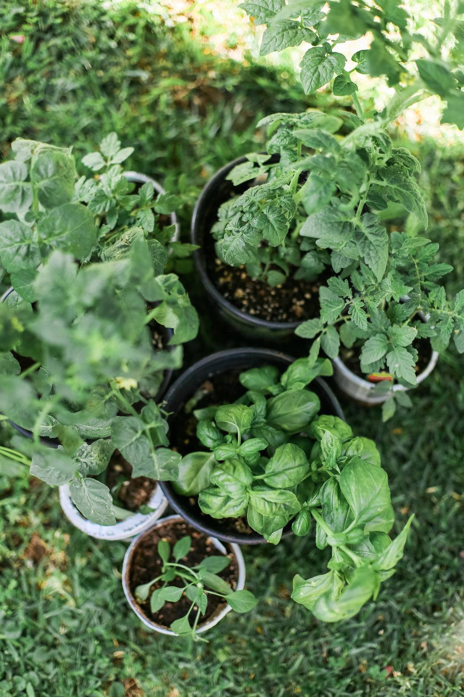 DIY Herb Planter Box-1.jpg