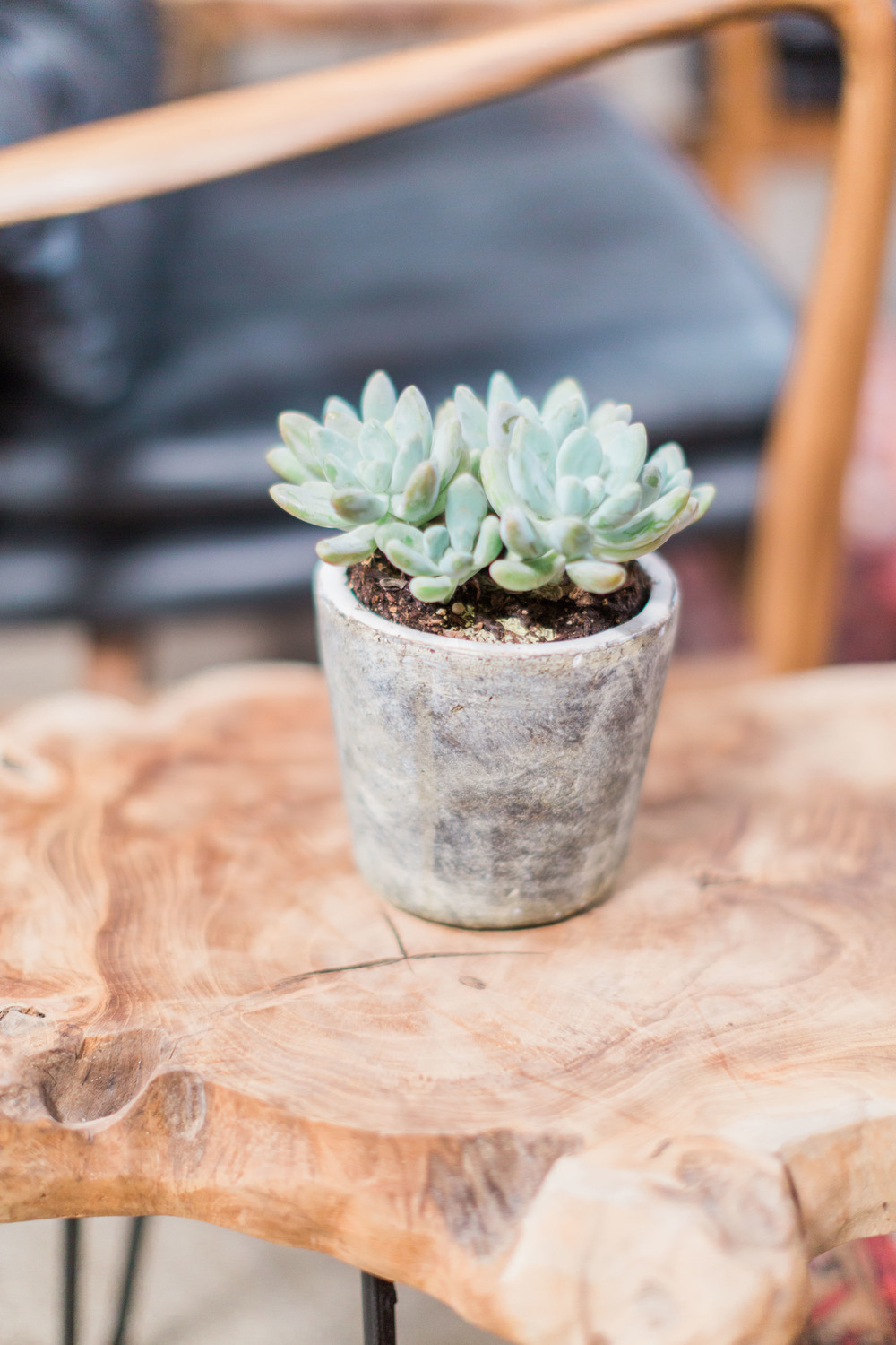 UMG Succulent and wood table.jpg