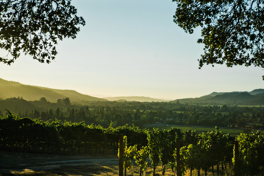 N Napa Backdrop.jpg
