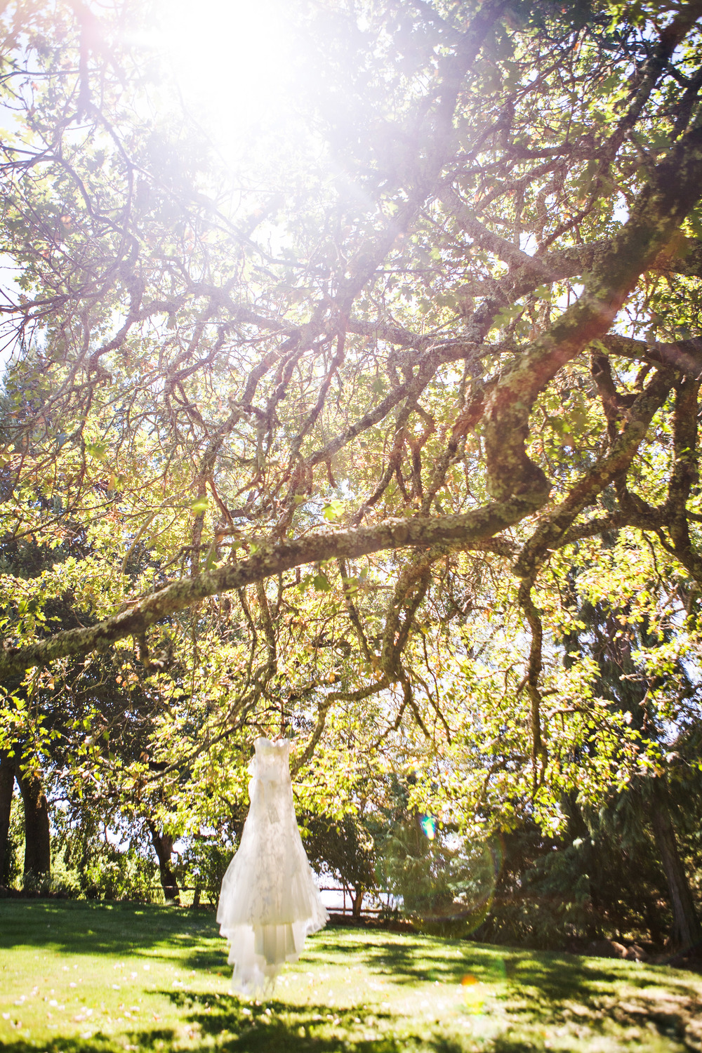 N Wedding dress in trees sonoma wedding .jpg