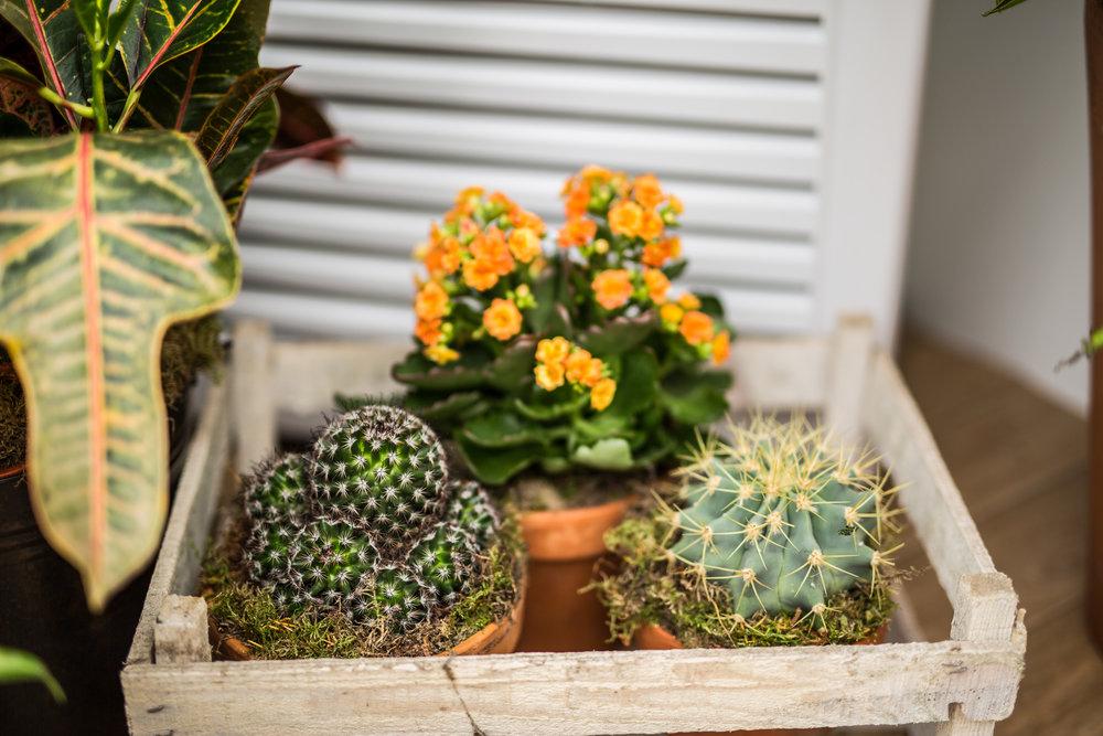 025 Cafe Cactus.jpg