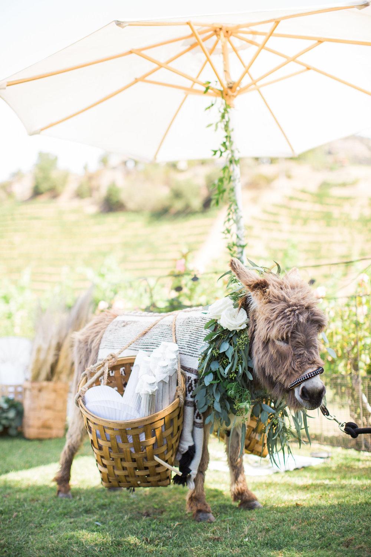22. Donkey.jpg