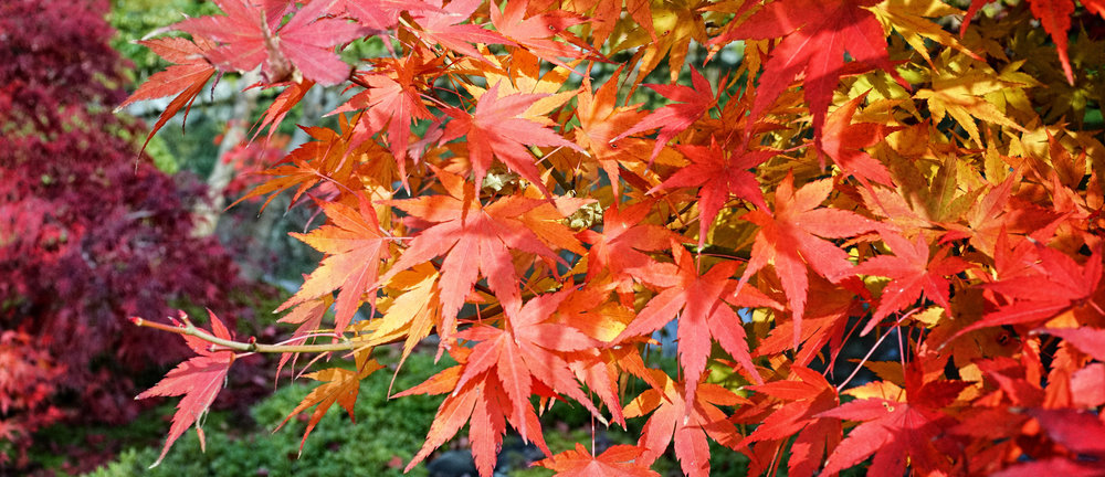 Autumn_Colors_of_Kyoto_ISSUU.jpg