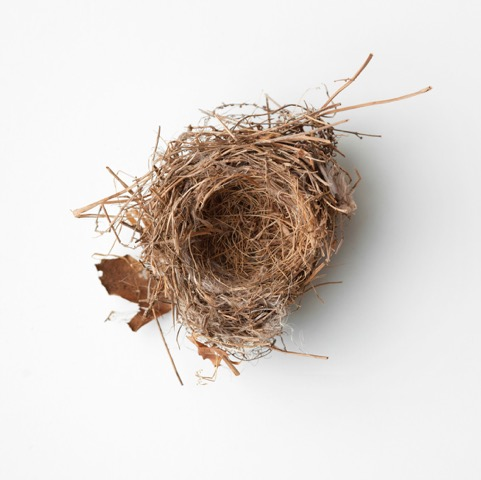 Francine Fleischers new birds' nest photo series: both delicate and powerful