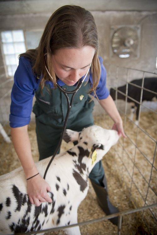 vet with calf.jpg