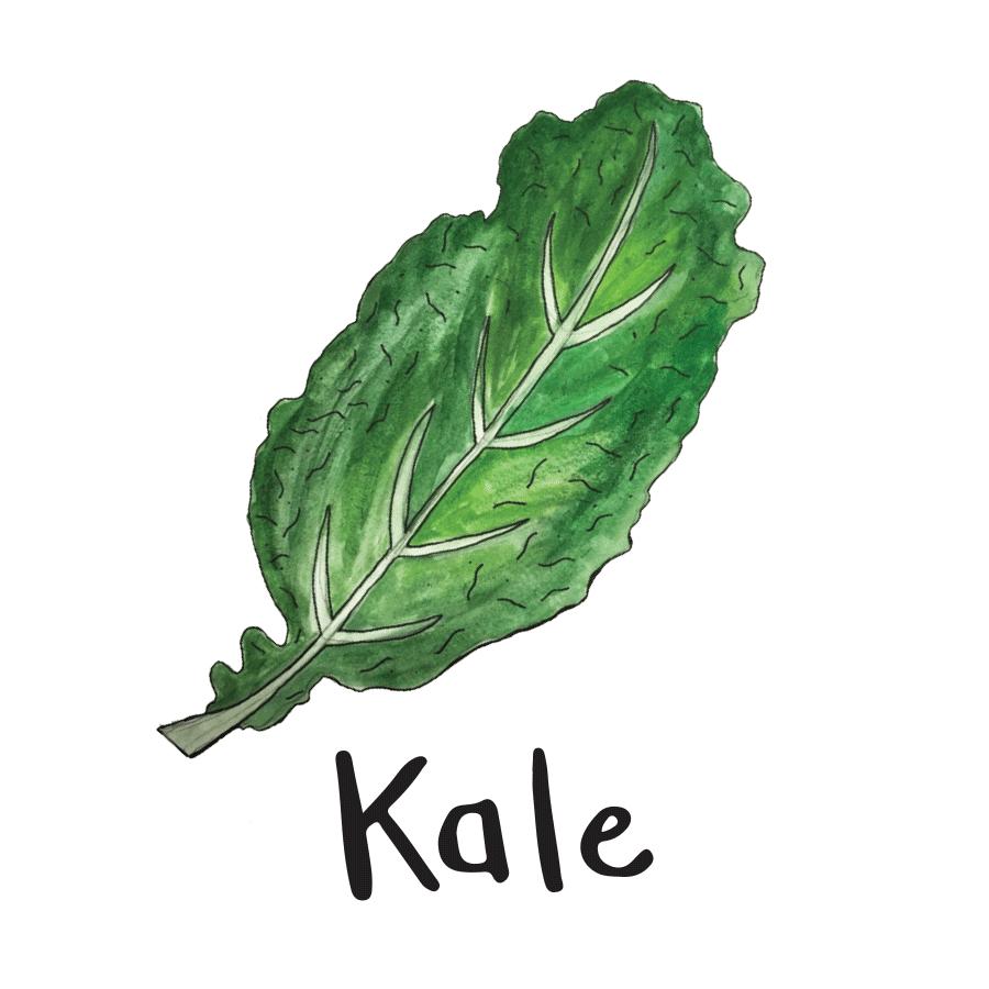 veggie_illustrations-8.png