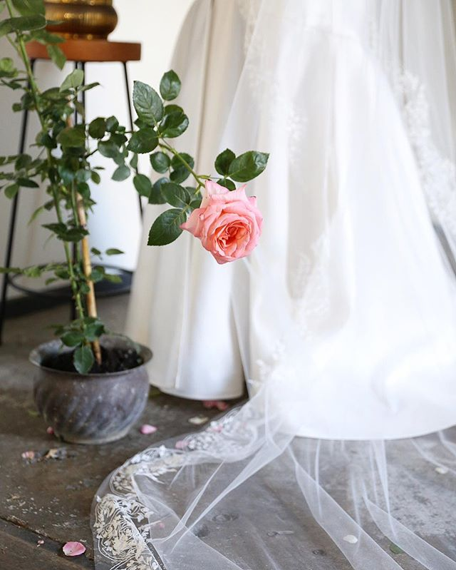 💗 rose bushes are my new favourite for shoots!  BTS for @kwhbridal . #maisonmeadow #eventdesign #veil #bride #roses