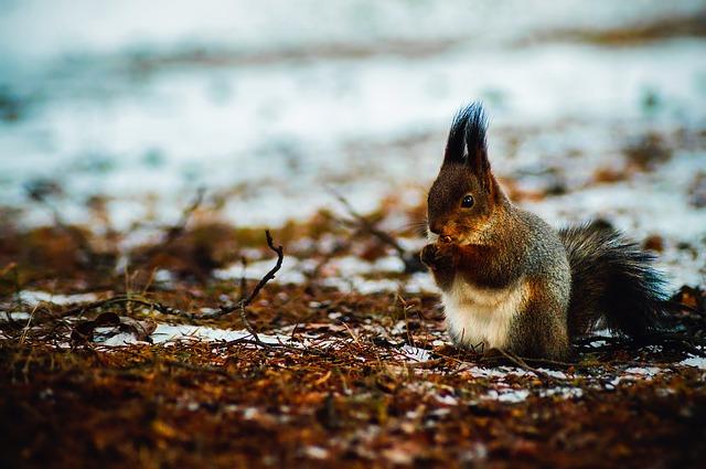 squirrel-1875849_640.jpg