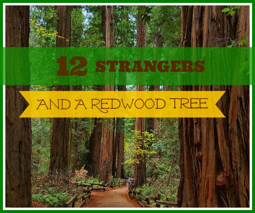12 Strangers And A Redwood Tree