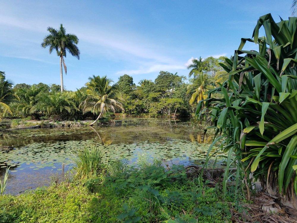 Pristine mangrove in Zapata preserve