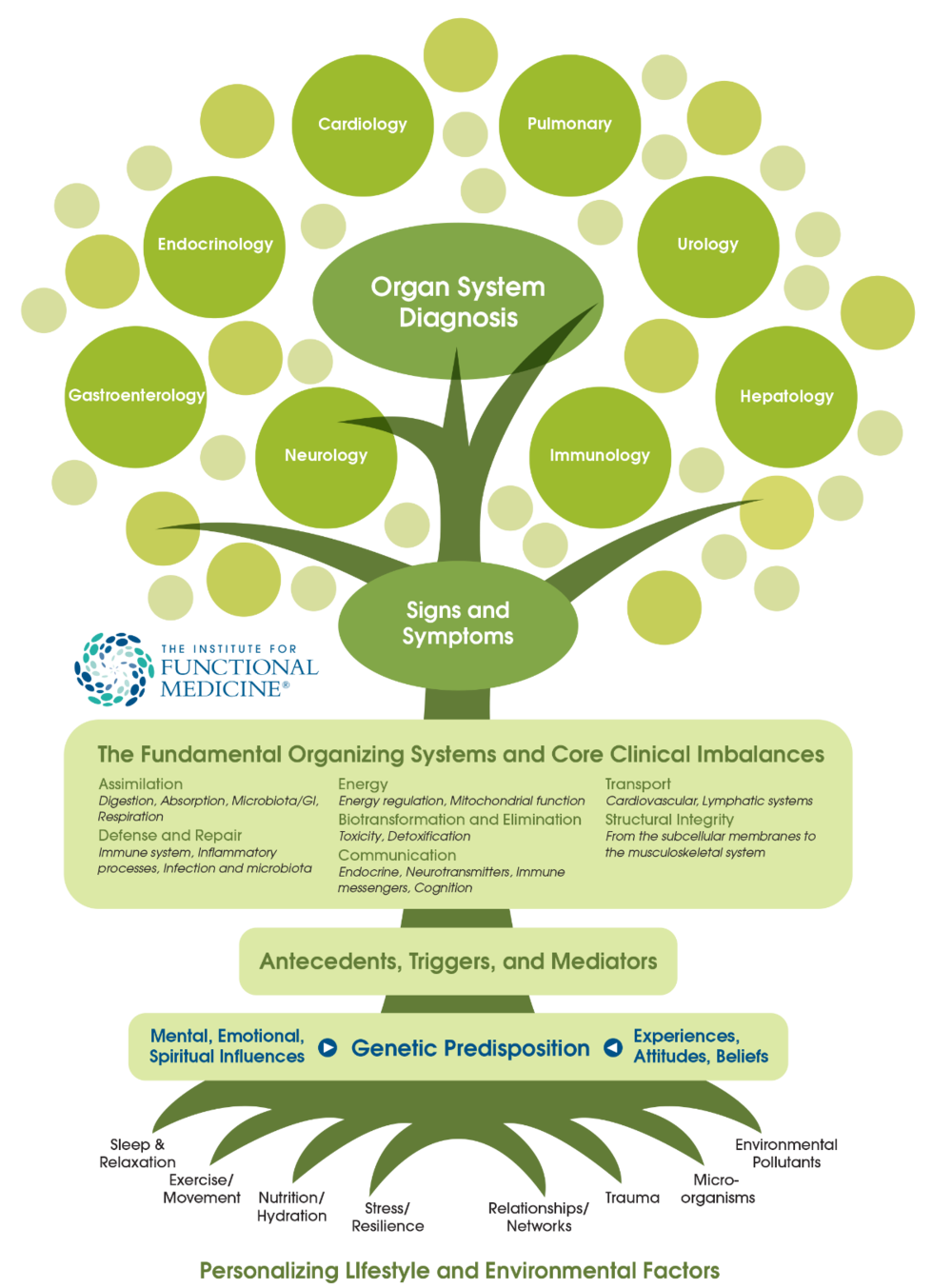 functional-medicine-tree png.png