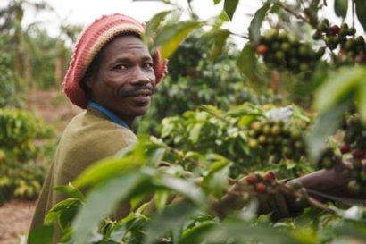 Mr Borunsya Agenina, small scale farmer at Ankole Coffee Cooperative Union (Uganda).jpg