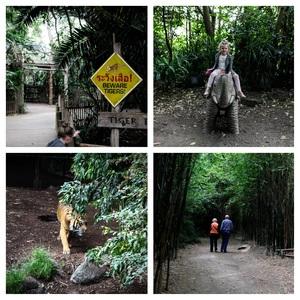 zoo+coll+1.jpg