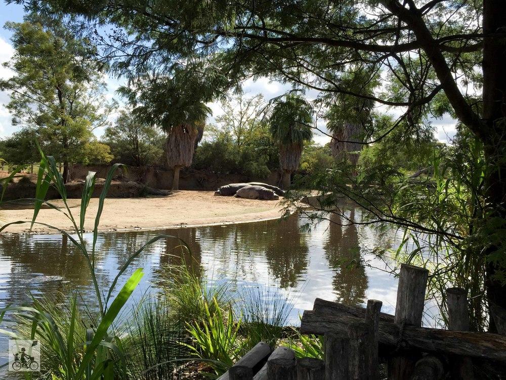 Mamma Knows East - Werribee Open Range Zoo