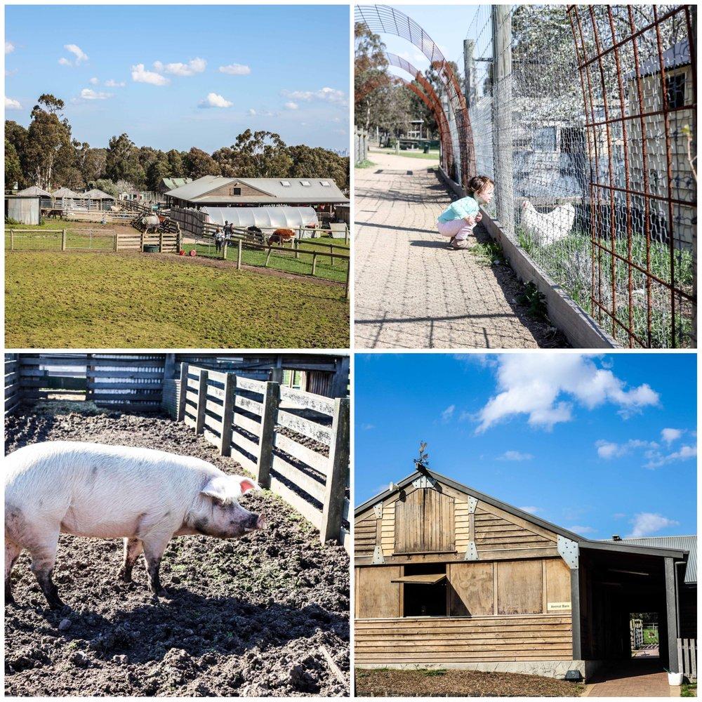 Mamma Knows East - Bundoora Park Farm