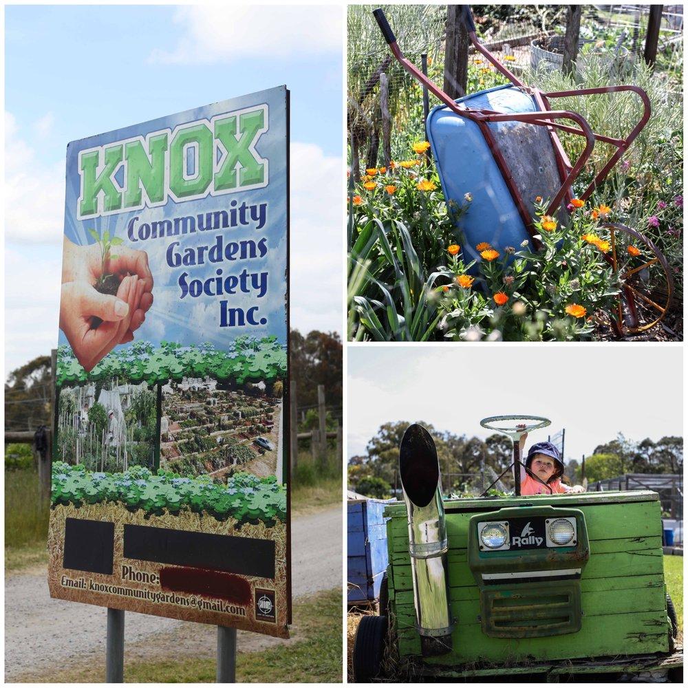 Knox Community Gardens 2.jpg