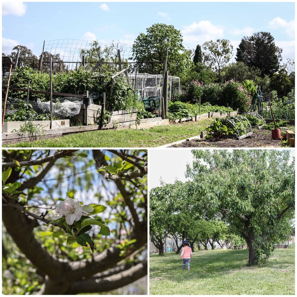 Knox Community Gardens 3.jpg