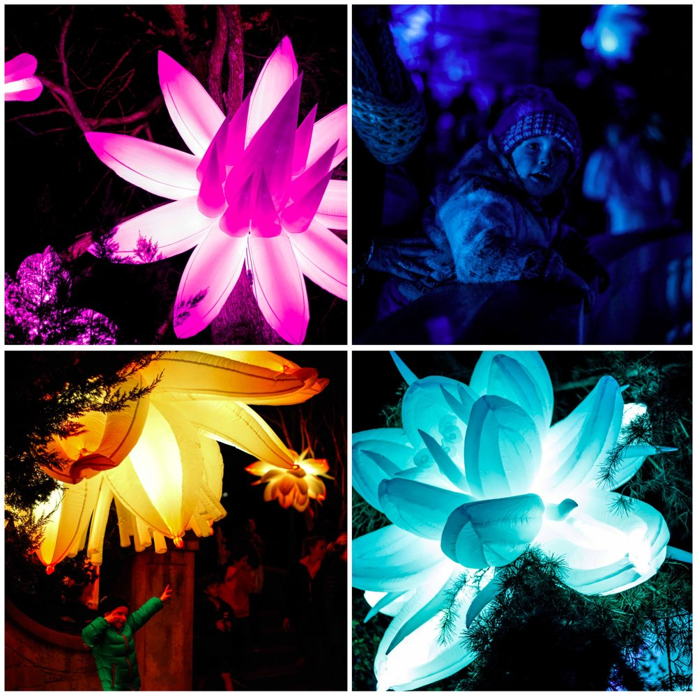 Mamma Knows East - alice's garden @ glow winter arts festival, malvern east