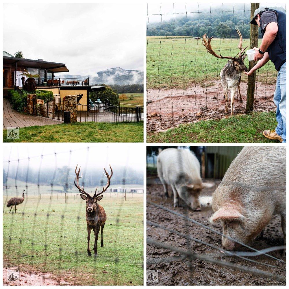 deer farm 2.jpg